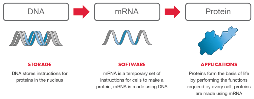mRNA is the software of life