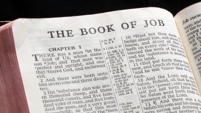 Image result for the book of job