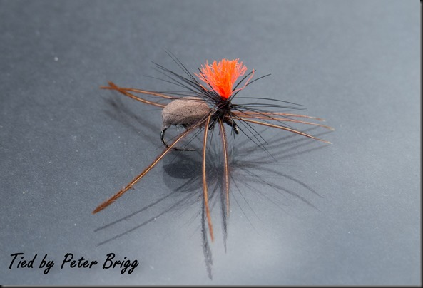 Peter Briggs Wolf Spider (1 of 1)