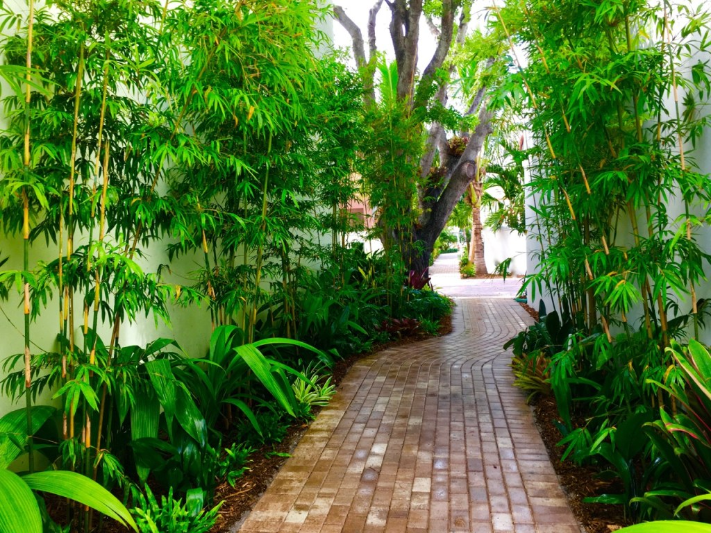 Biophilic Oasis in Fort Lauderdale Florida USA Great example of biophillia in Urban area By Biophilic Designer Jeffrey Allis