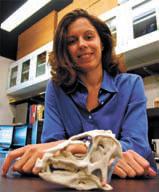 Лора Порро с черепом гетеродонтозавра. Journal of Vertebrate Paleontology/ Natural History Museum