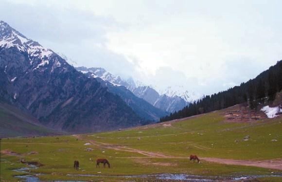 Близ деревни Сонамарг, Кашмир (2500 м). 3 мая 2013 года. Фото С. Литвинчука