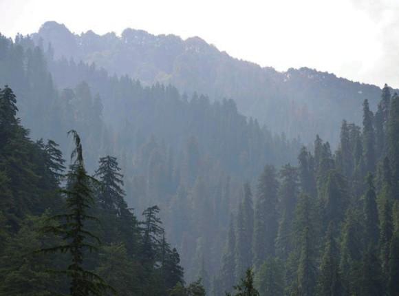 Темнохвойный лес в долине Хатту. Шиваликский хребет. 5 июня 2015 года