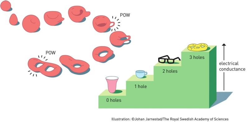 Топология — область математики, интересующаяся свойствами пространства, которые остаются неизменными при непрерывных деформациях, например количестве дырок в объектах на картинке. Топология была ключевым инструментом для открытий, сделанных лауреатами Нобелевской премии 2016 года. Она помогла объяснить, почему поперечная электрическая проводимость внутри тонкого слоя вещества изменяется целочисленным образом