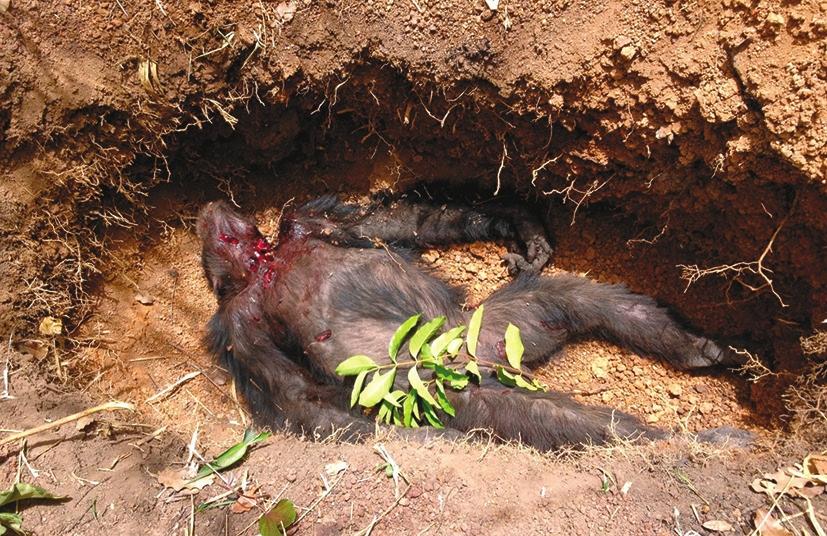 Фудуко в могиле, вырытой исследователями. Как видим, не стоит верить тем СМИ, которые сообщили, что его тело было обглодано до костей (https://d.ibtimes.co.uk/)
