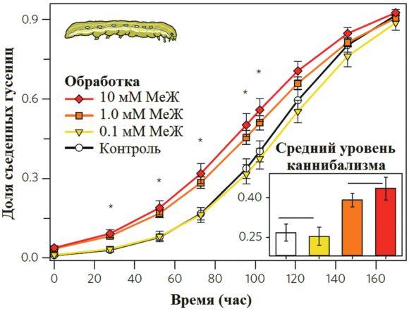 Рис. 2. Каннибализм гусениц малой совки на растениях, обработанных метилжасмонатом (МеЖ) [1]