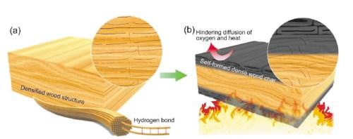 Схематичное изображение образования самопроизвольно формирующегося огнезащитного слоя на поверхности уплотненной древесины. Илл. из [2]