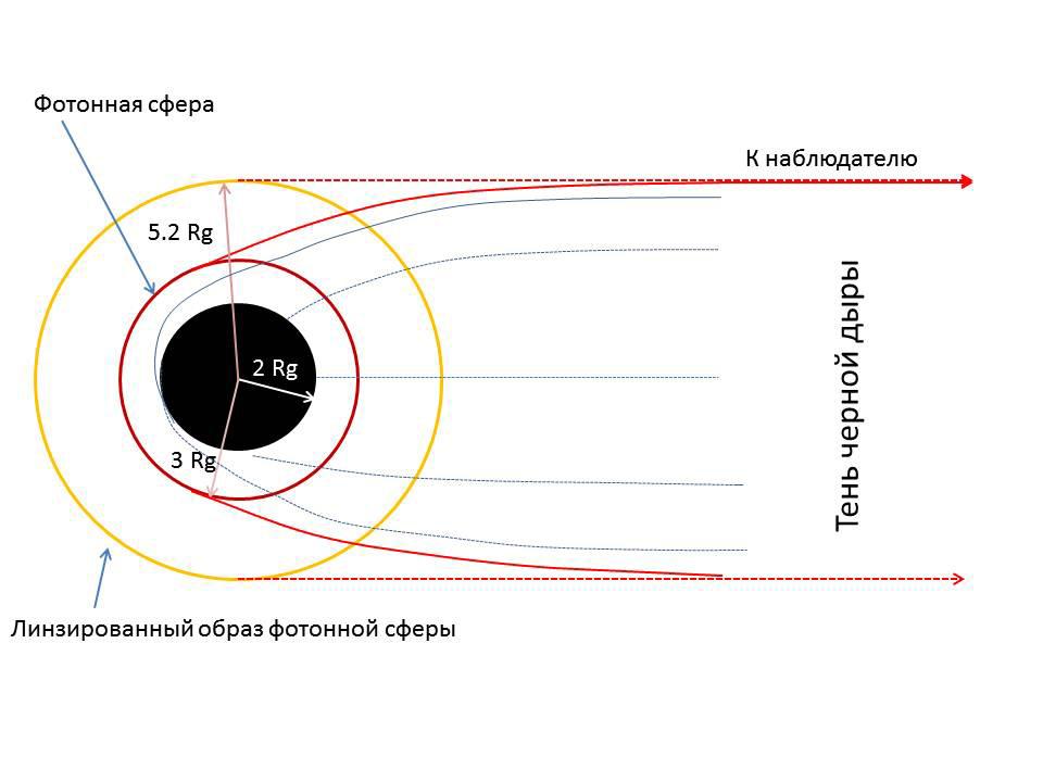 Рис. 2. Схема тени черной дыры. Кривыми условно показаны геодезические линии, по которым движется свет. Серым цветом — линии, которые упираются в горизонт черной дыры. Хотя, если между фотонной сферой и горизонтом светится падающее вещество, часть тени может быть слабо освещена