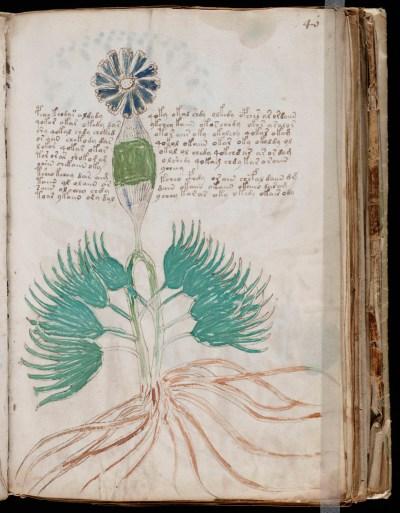 На страницах манускрипта много зарисовок растений — возможно, это какой-нибудь лечебник. Но мы вряд ли сможем выяснить наверняка  («Википедия»)