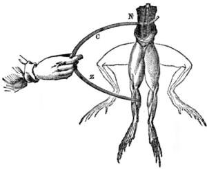 Рис. 1. Эксперимент Луиджи Гальвани с лягушкой