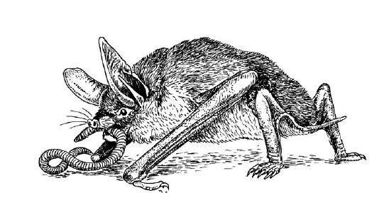 Рис. 4. Новозеландская летучая мышь (Mystacina tuberculata), поедающая дождевого червя. Мышь использует крылья, чтобы в сумерках вылететь из дупла, а под утро в него вернуться. Охотится же она, бегая по земле на доставшихся от предков видоизмененных для полета конечностях. M. tuberculata бегает довольно ловко, но далеко не так ловко, как завезенные в Новую Зеландию кошки. Какая грустная судьба!