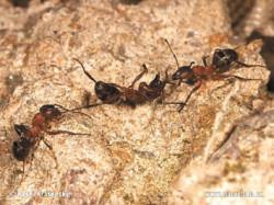 38_ants-5