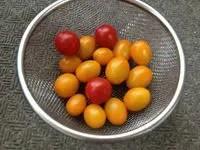 トマトづくり