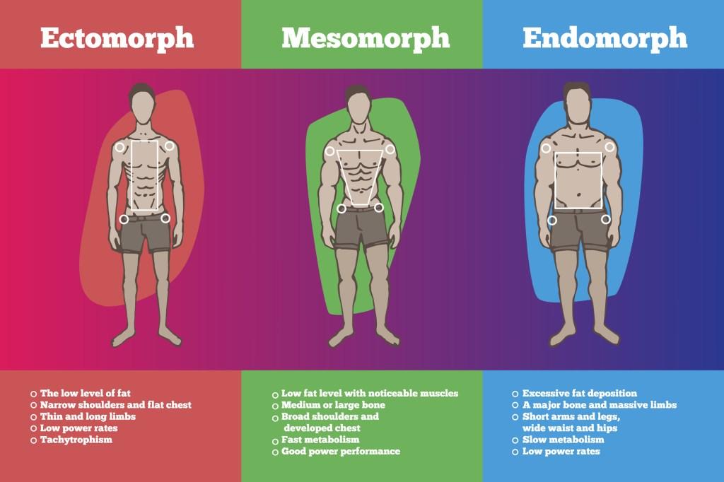 Beginner's Guide to Body Types