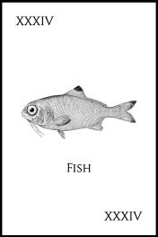 34Fish