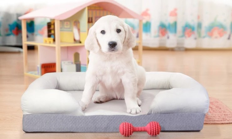 Try Any Mattress of Your Choice RISK-FREE @ Home W/ Free Delivery Puffy_Dog_Bed_800x Best Orthopedic Dog Bed Reviews