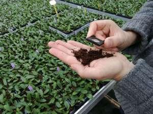 inspectie roofmijten potplanten