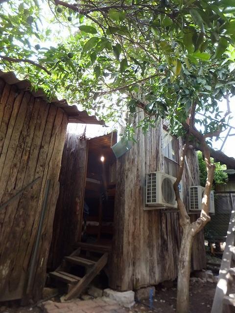自分たちが泊まったツリーハウス(ドミトリー)