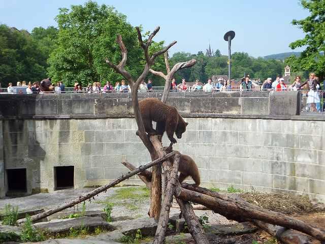 ベルン、クマ公園のクマ