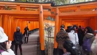2手に別れる鳥居のトンネル:伏見稲荷大社