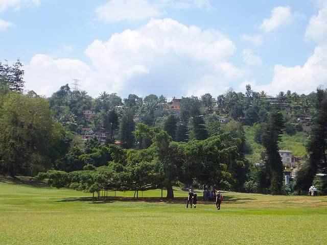 この木なんの木気になる木:キャンディ植物園、スリランカ