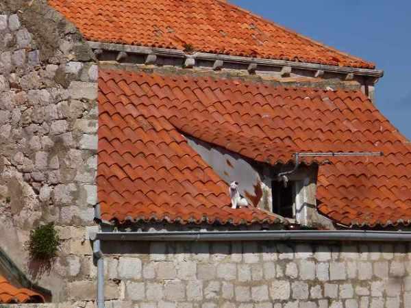 ドブロブニクの屋根にいるネコ