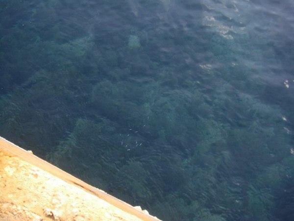 海は透き通っていて、魚もたくさん泳いでました