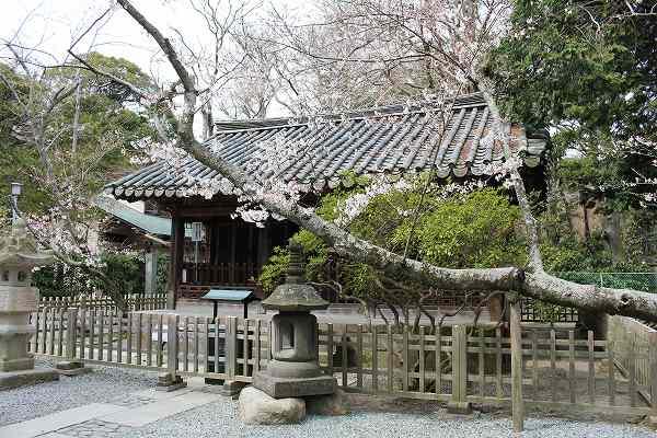 大仏裏にあったいい感じの建物と桜のコンビネーション