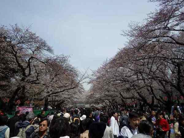 上野公園の桜…とすごい人の混雑量