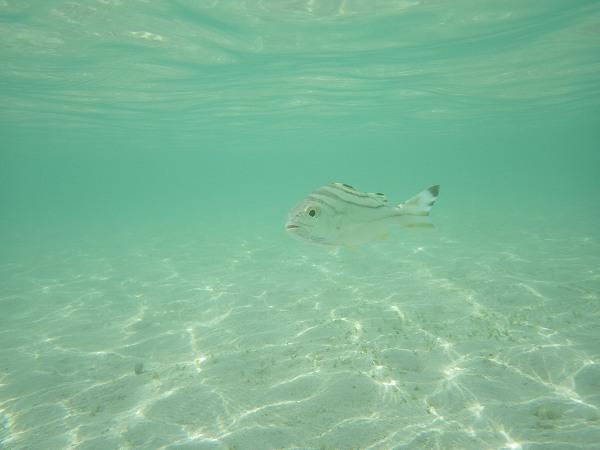 水中で魚もバッチリ撮れました♪