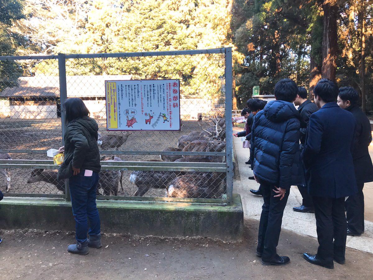 佐原・鹿島神宮旅行35:シカがいたよ