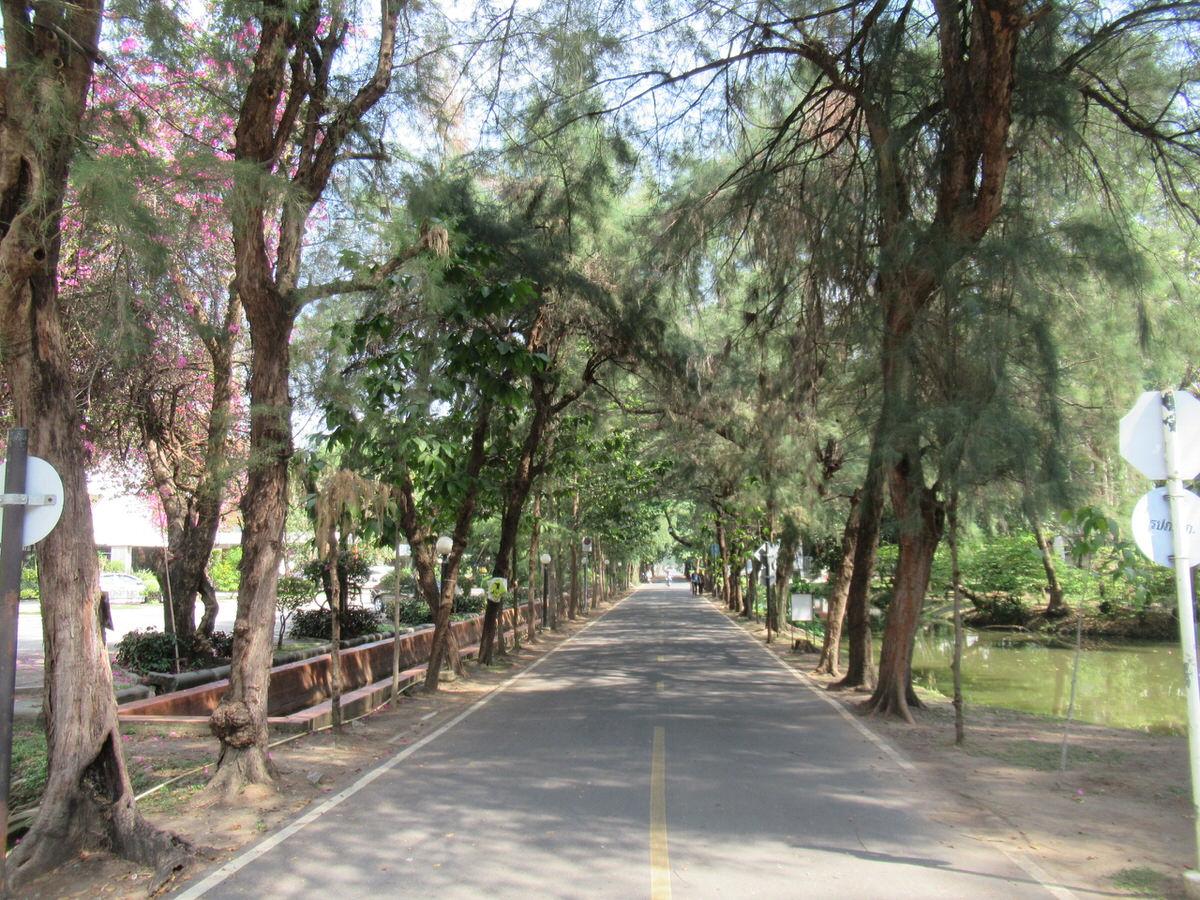 カップルが別れる道・林通り:カセサート大学校内の様子・雰囲気