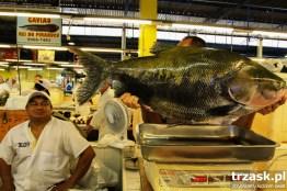 Targ rybny w Manaus