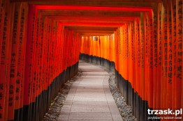 Torii gates at the Fushimi Inari Shrine, Kyoto