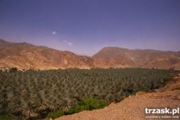 Sucho - zielono - sucho. Daktylowy sad w Birkat Al Mouz. Oczywiście w Omanie