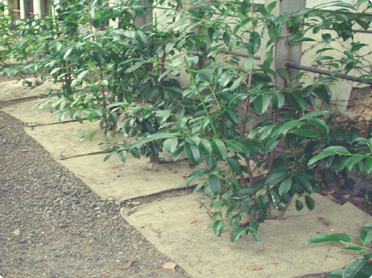 植樹ニューマット B-2・植樹ニューマット B-2スーパー