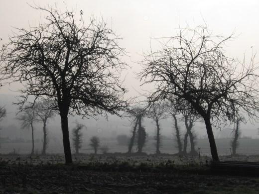 fák reggel