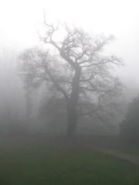 Brouillard dans le jardin