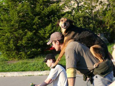 Kutya utas - állandó résztvevő