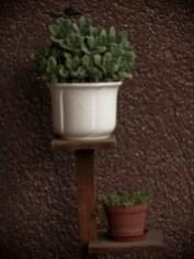 növények az erkélyen