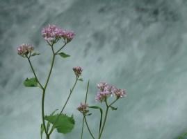 Kisvirág és folyó