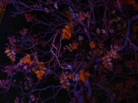 Rezgő levelek
