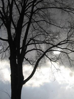 Téli képek on