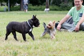 bulldog piknik-0812