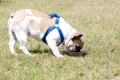 bulldog piknik-0838