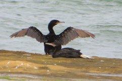 Gaspard photographie tous les oiseaux