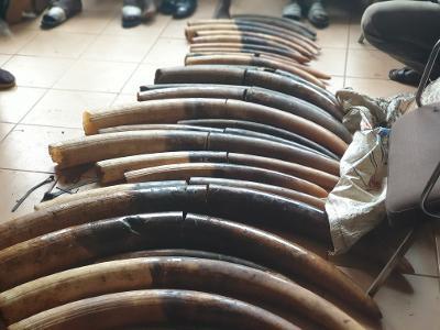 5 ans de prison pour quatre trafiquants d'ivoire