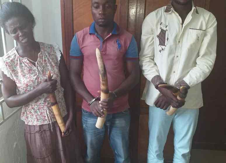 Gabon: Trois trafiquants d'ivoire interpellés à Mouila