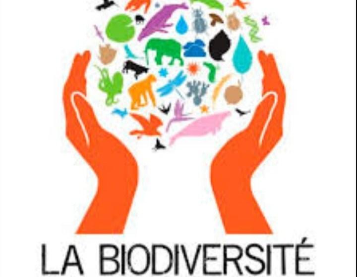 Environnement/Journée mondiale de la biodiversité: l'ECOFAC6 dresse son bilan à mi-parcours