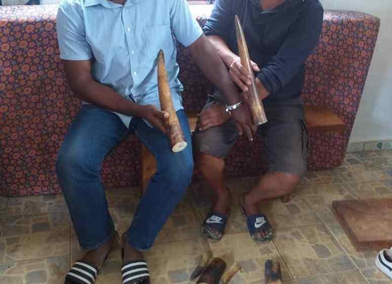 Gabon/Trafic d'ivoire: un philippin et son complice saisis à Mouila